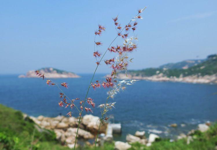 Potoi Island Nature Flower Non-urban Scene Freshness HongKong