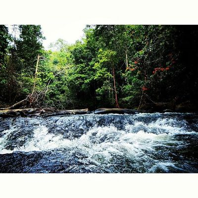 Sitting in the middle of the river in the Borneo Jungle. Borneo INDONESIA Jungle River Rapids Forest Trees Riseoftheecowarriors Ecowarriorsrise Savetherainforests Saynotopalmoil Savetheorangutan Palmoil Nature Destruction Environment Water Canon Tamron Lubuk Lubukmali Lubukmaliriver Kalimantan Westkalimantan Dayak