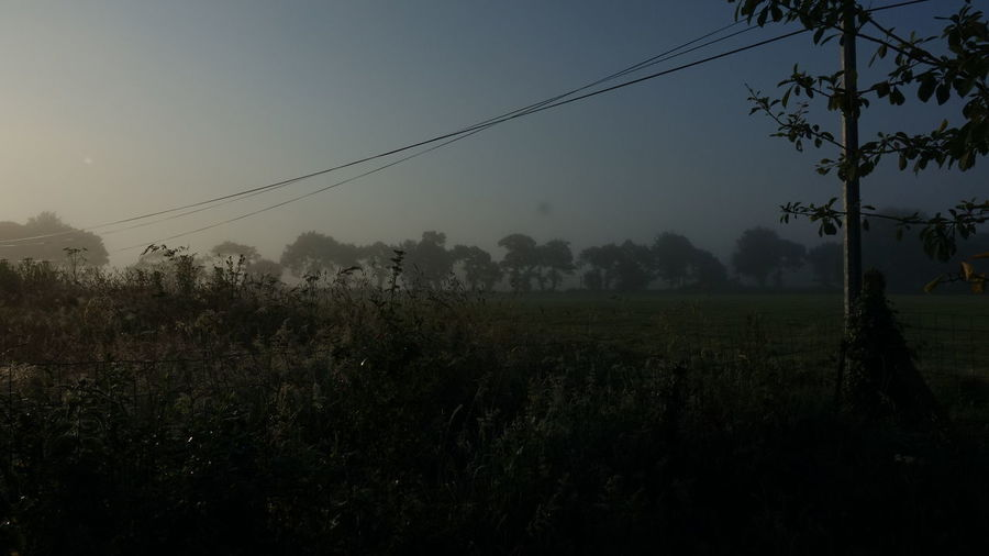 Morning Morning Glory Foggy Plant Beauty In Nature Landscape No People Growth Cable Tranquility Land Nature Field Scenics - Nature Environment Electricity  Non-urban Scene Outdoors Power Line  Idyllic Behind The House Junglelike Morningglory Morning Light Loveit