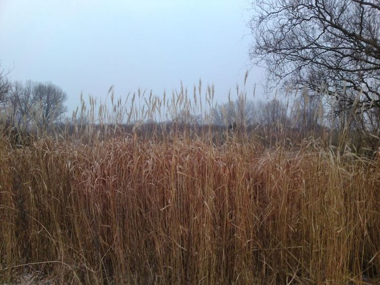 Winter Grass Gräser Sumpf Nature Nature Photography Nature_collection Naturelovers Plants