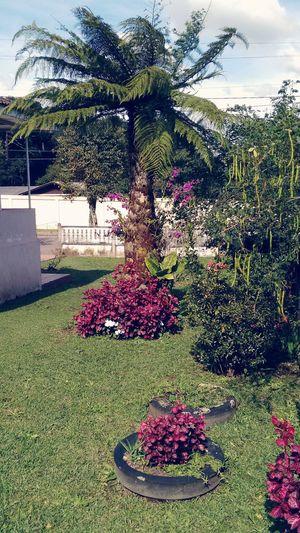 Domingo Ensolarado Jardim&Sol... Relaxing Enjoying Life