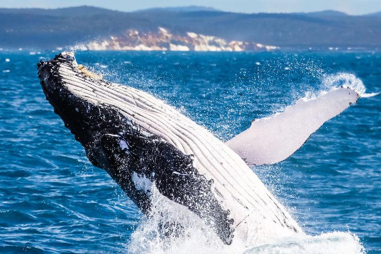 Close-up of whale in sea
