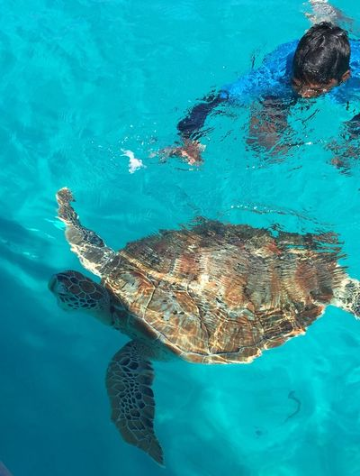 Nature Turtle Malaysia Snorkeling Photo Sea Sealife Diving Blue Malaysia Pulau Redang Nature_collection Animal Themes Animal Wildlife Live For The Story The Great Outdoors