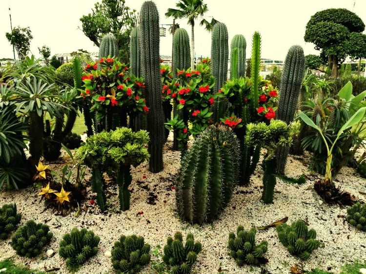 From Kie Kulim Nature Vagetable And Plants Cactus Cactus Garden