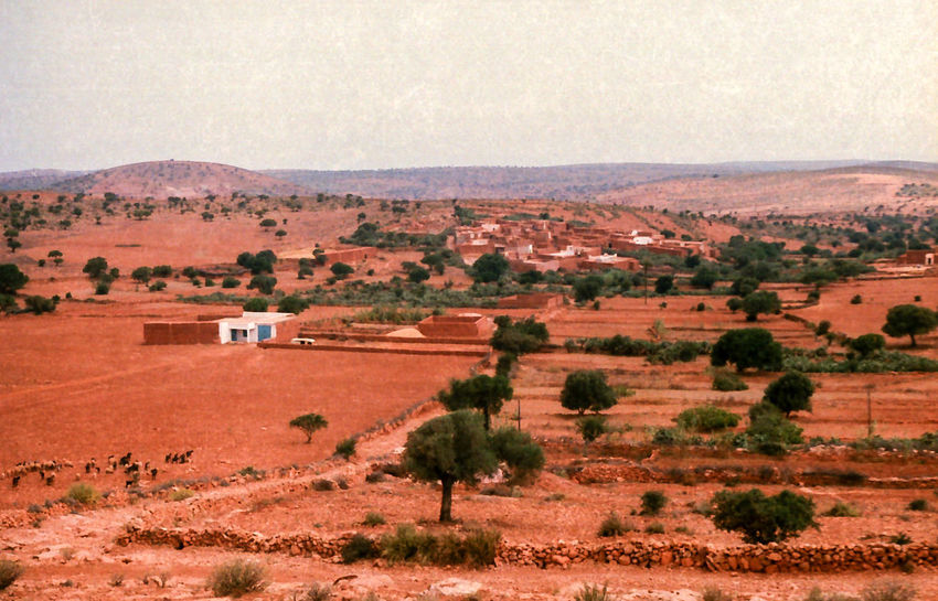 1985. Red land in Morocco. Arid Climate Beauty In Nature Day Desert Geology Growth Landscape Nature Non-urban Scene Outdoors Physical Geography Red Land Remote Rural Scene Scenics Solitude Tranquil Scene Tranquility Travel Destinations