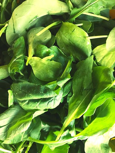 Fresh arugula Rucula Arugula Green Color Leaf Plant Part Healthy Eating Full Frame Growth Food And Drink No People Freshness Food Wellbeing Backgrounds Vegetable Plant Close-up Nature Beauty In Nature Day Green High Angle View