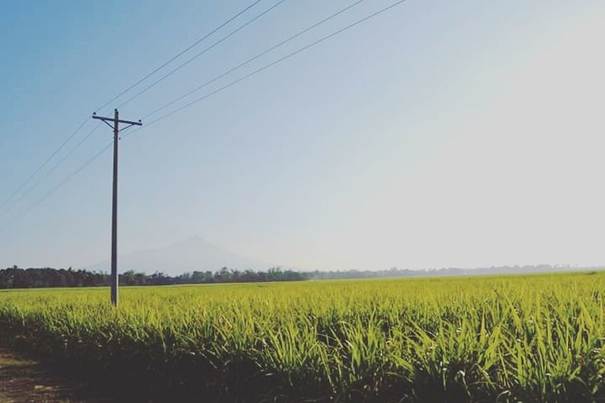 Farm Field Nature Agriculture Crop  Rural Scene Clear Sky No People Landscape Beauty In Nature Electricity Pylon Tranquil Scene Sky Outdoors Day