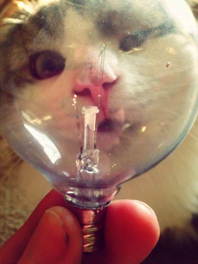Serenity. Looks like a lollipop kitty.