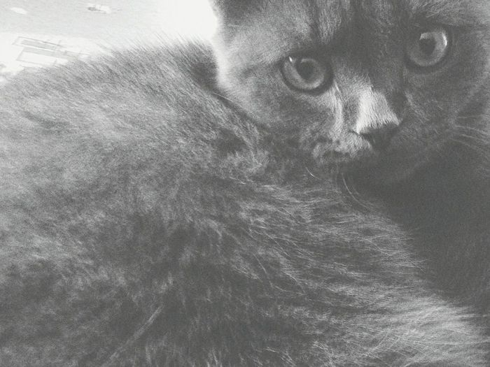 Ma panther :з First Eyeem Photo