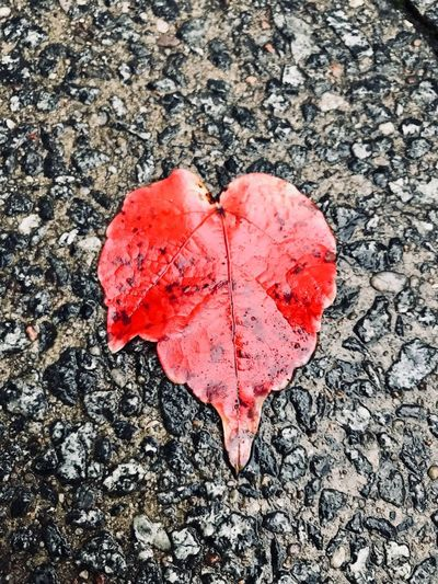 Autumn Leaf Iphonephotography IPhoneography Leaf Red Autumn Heart Shape Change Day Nature