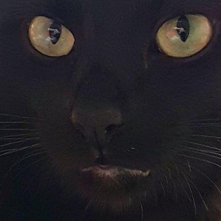 Blackcatsbringluck Blackcatsaregood Cateyes Cat Eyes Cat Photography Cat Lovers Catface