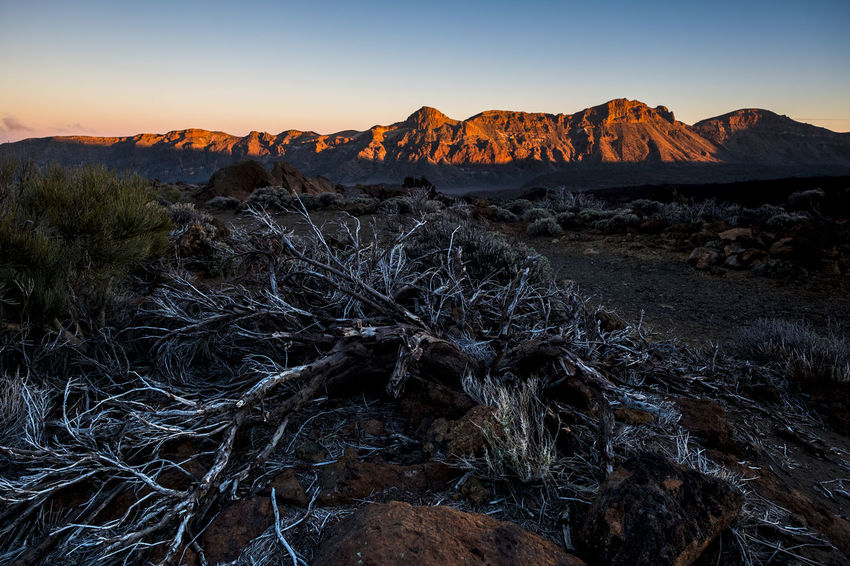 red mountain in sunset at el Teide national park with dead plants El Teide National Parc Arid Climate Beauty In Nature Climate Dead Plant Environment Eroded Formation Geology Land Landscape Mountain Nature No People Outdoors Physical Geography Plant Rock Rock - Object Rock Formation Scenics - Nature Sky Sunset Tranquil Scene Tranquility