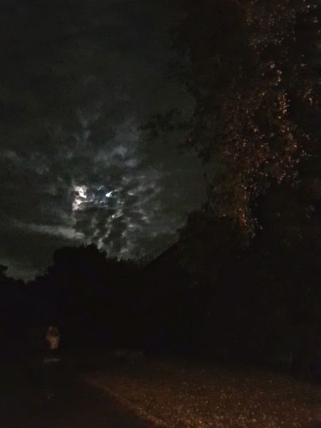 Night Moon Tree Outdoors Nature Sky город Straße небо Wolkenhimmel облака Himmel♥ небо облака облака👍 Cloud - Sky Wolken Und Himmel Samsungs8 ночьнаулице Moon Nacht Ночь