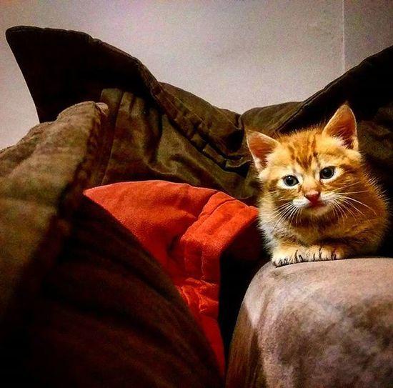 ❤ un coup de foudre ❤ The Week On EyeEm Pet Portraits