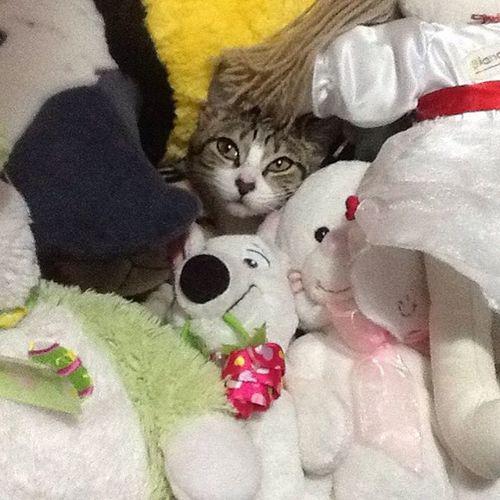 Booooa Tarde Miauamigos!! Cadê a Nenê⁉️ 😹😹😹😹😹 Myfatcat Nenêthefatcat Nenêcat Nenêpelúcia Catsoninstagram Catselfie Ilovecats Amogatos Cat Catslife Clubdogsandcats
