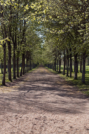 Beauty In Nature Canon Day Growth Landscape Nature No People Outdoors Scenics The Way Forward Tree Way