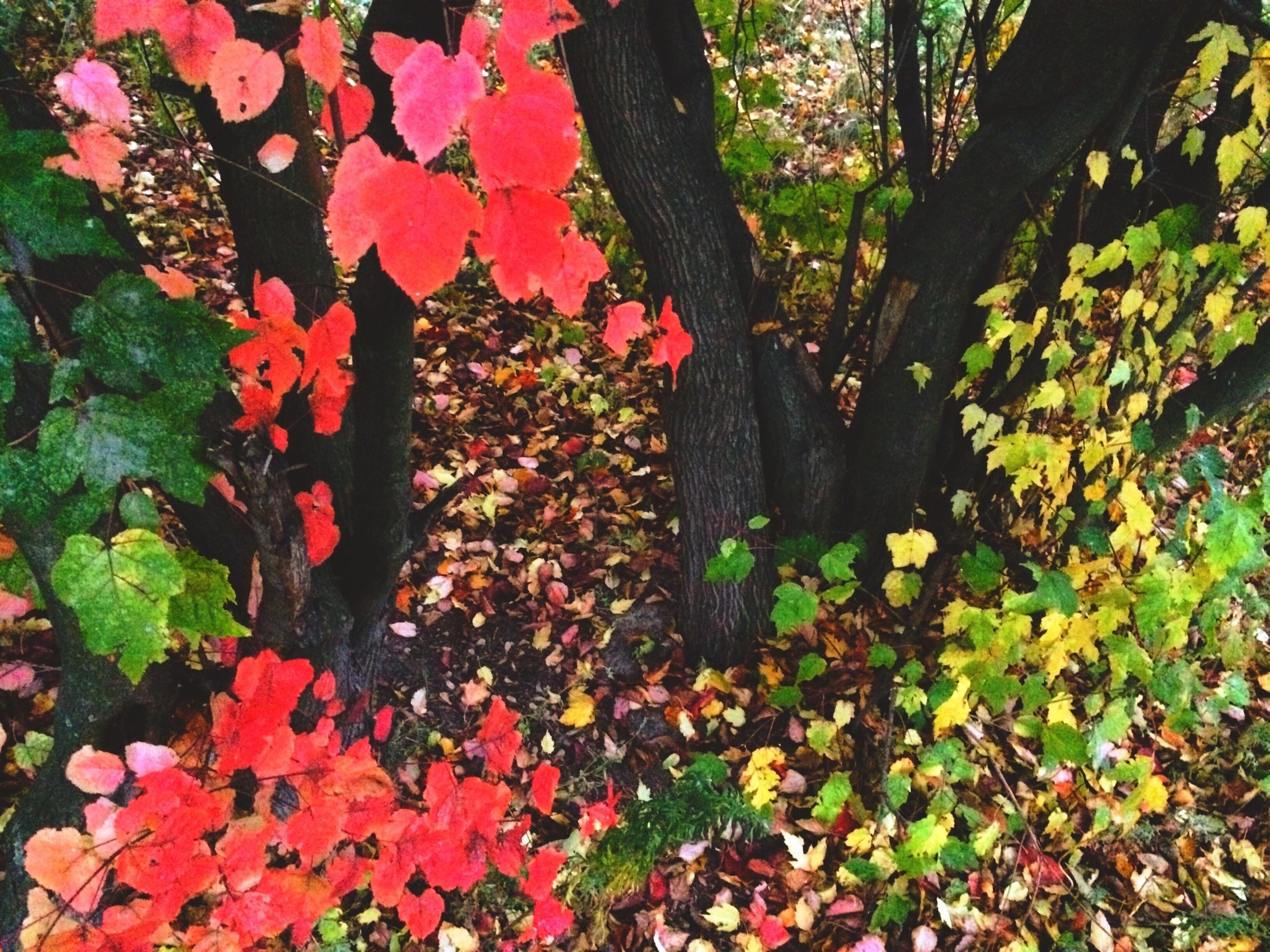 growth, flower, leaf, beauty in nature, nature, plant, red, tree, freshness, green color, tranquility, fragility, day, tree trunk, park - man made space, outdoors, season, autumn, high angle view, change