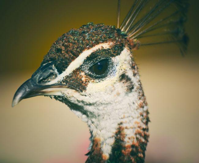 Pets Bird