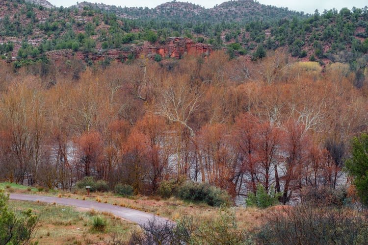 Sedona, Arizona Arid Climate Autumn Beauty In Nature Change Day Environment Field Forest Growth Land Landscape Nature No People Non-urban Scene Outdoors Plant Scenics - Nature Tranquil Scene Tranquility Travel Tree