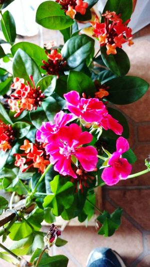 Flower Plant Day Petal No People Nature Fragility Outdoors Beauty In Nature Lolaloyal EyeEmNewHere