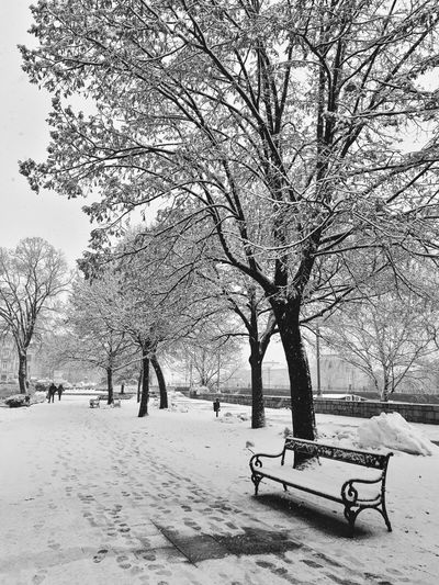 Trees on snow covered park during winter