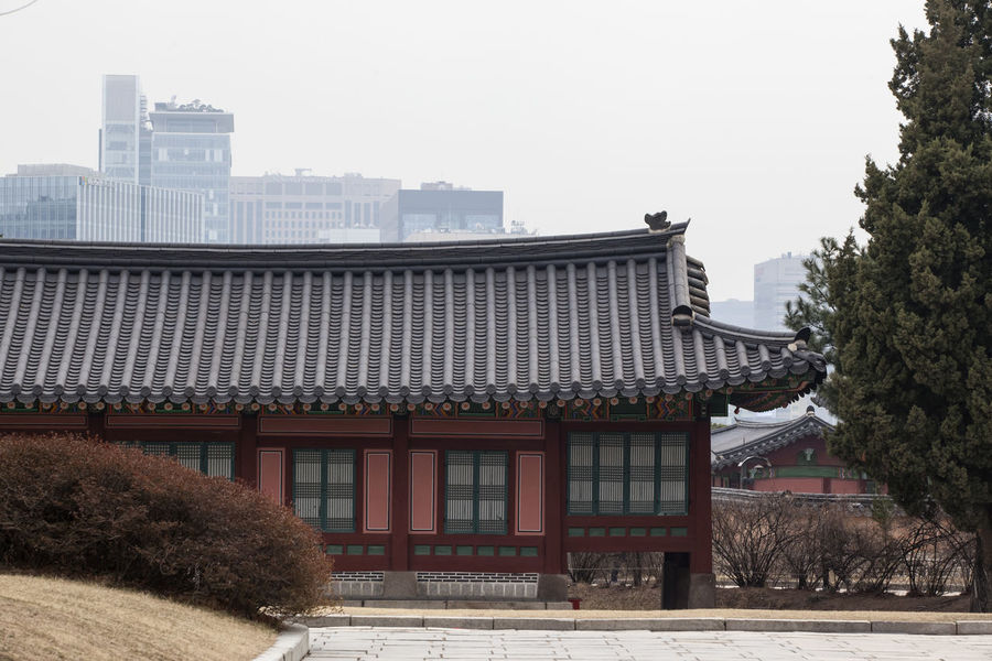 Architecture Building Building Exterior Built Structure City Clear Sky Copy Space Day Exterior Façade Gyungbok Palace Historic Place House No People Outdoors Residential Building Residential Structure Roof Sky Travel Destinations Tree Window