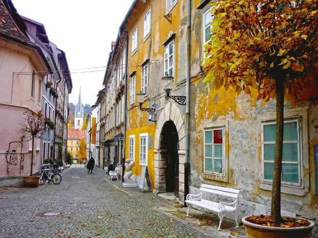 Town Slovenia Tree Yellow Leaves