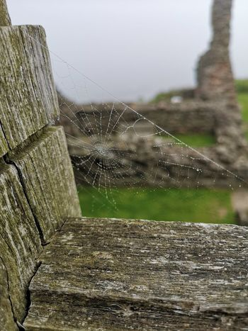 Cobweb Close-up
