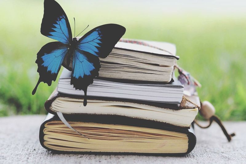 Fairytales come to life sometimes Book Education Close-up Butterfly Insect Beautiful