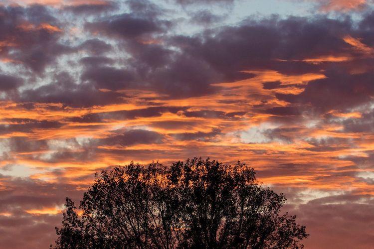 Dawn Sky Tree