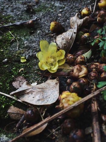 蝋梅 EyeEm Flower Flower IPhoneography Plants Nature