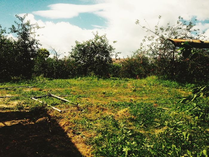 Lato pełną piersią Wisnie Drzewa