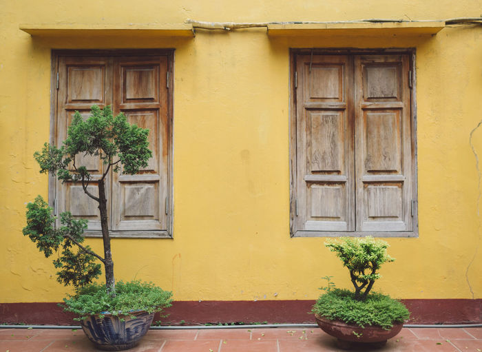 Potted plants by house