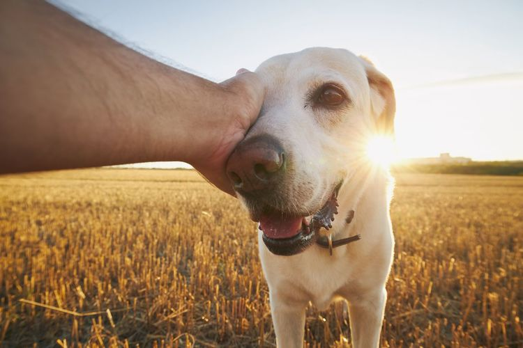Close-up of hand touching dog on field