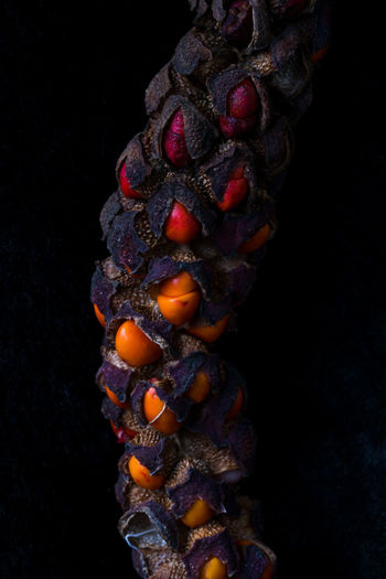 Black Background Studio Shot Indoors  Close-up Still Life Creativity Single Object Nature Tree Seed