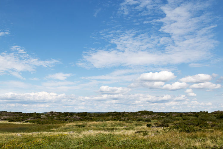 Scenic view of grassy landscape against cloudy blue sky on sunny day