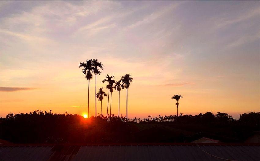 Sunset Sky Palm