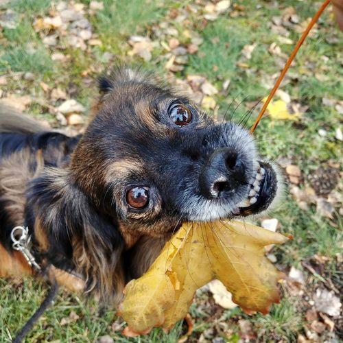 Dog Pets Portrait Close-up