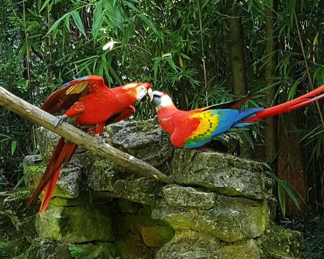 Zoo D'amneville Birds_collection Birds Parrots Of Eyeem Parrots Bird Parrot