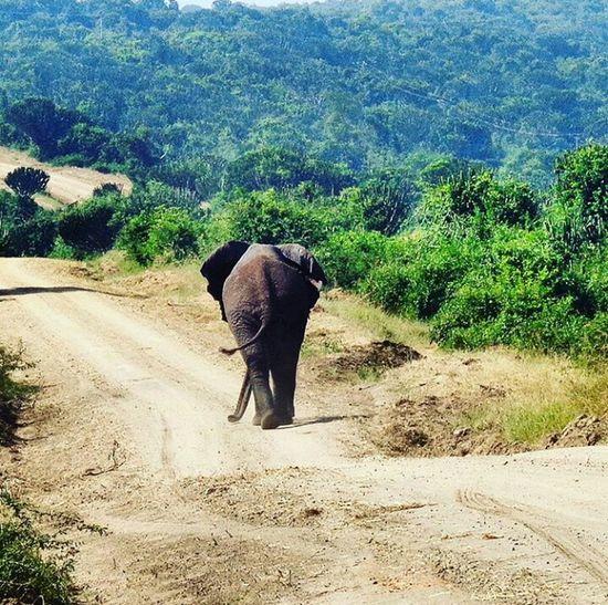Queen Elizabeth National Park Lonelyplanetuganda Nationalgeographic Africa Pearlofafrica Ugandawildlife First Eyeem Photo Natgeotravel Travelhub