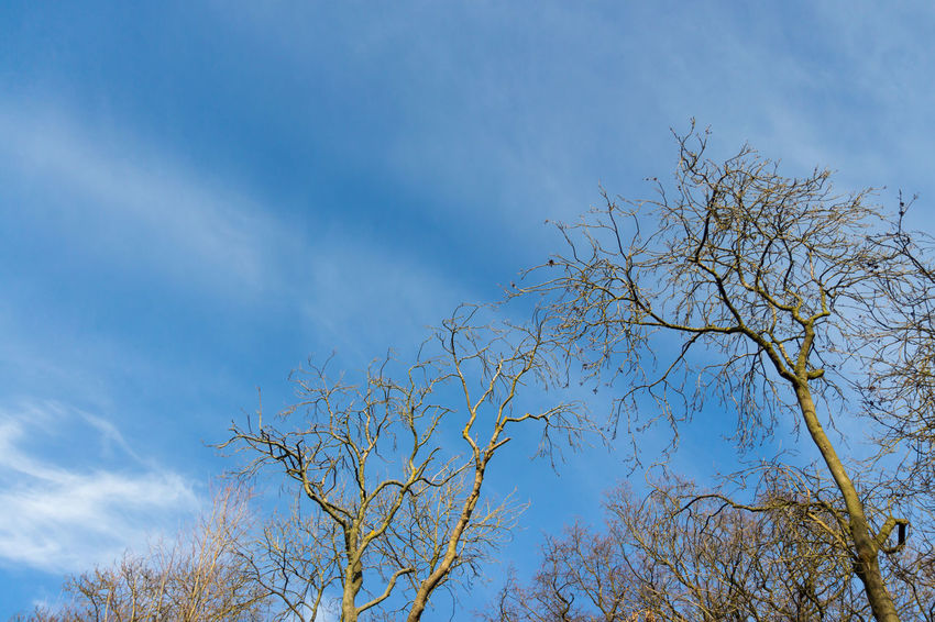 Blue cloudy some stormy skies in England Blue Blue Sky Blue Sky White Clouds Day Daytime Nature No People Outdoors Outdoors Photograpghy  Outside Rainbow Colors Sky Trees Branches Against Blue Sky White Clouds And Blue Sky