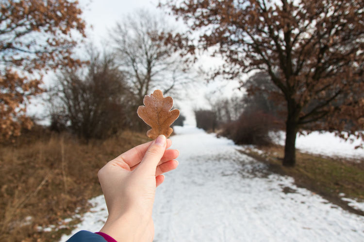 Cropped image of hand holding oak leaf on road during winter