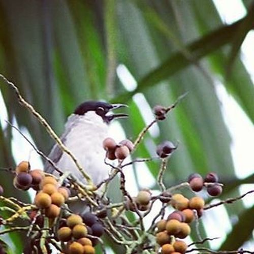 Singing a song. Birds Birding Bird Birdofinstagram Birdsporn Best_birds_of_instagram Birdslover