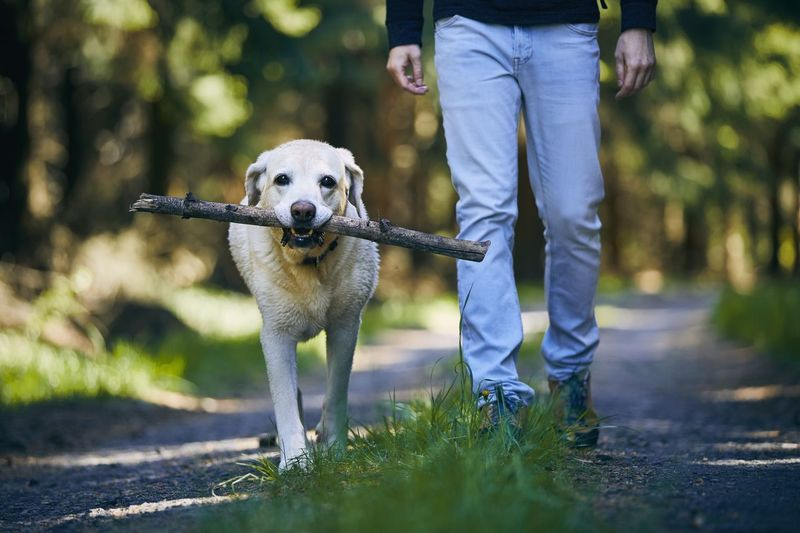 Low section of person with dog walking outdoors