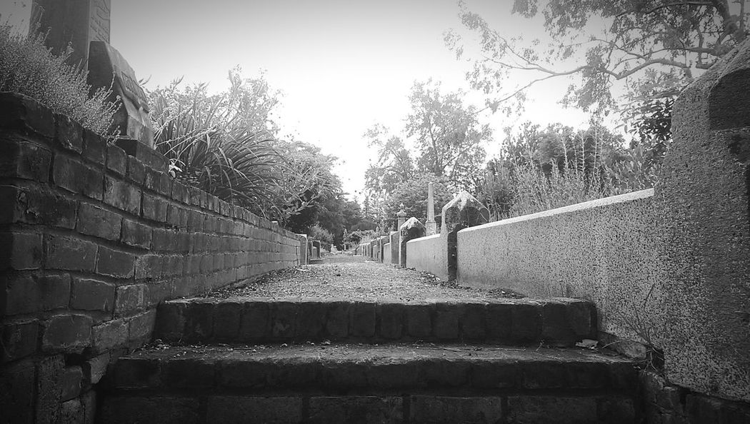 Pathways between plots Outdoors Plots Sacramento Beauty Everywhere Beauty Of Decay Pathways Cemetery_shots Cemetery Photography Cemetary Beauty Cemetery Walkways  Trees Black And White Black And White Collection  History Northern California Pioneers Eye4photography  Mobile Photography Historical Place EyeEm Gallery Memorial EyeEm Cemetery Architecture Tree