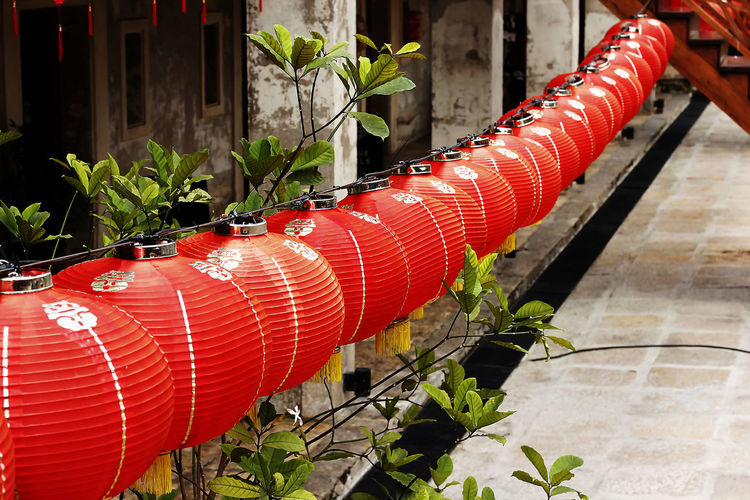 Red Lantern in Chinese style. Red Lantern For The Chinese New Year Architecture Built Structure Close-up Day Focus On Foreground Growth In A Row Leaf Metal Nature No People Outdoors Pattern Pipe - Tube Plant Plant Part Potted Plant Red Red Lantern Red Lantern Hot Pepper Red Lanterns China Red Lanterns For Chinese New Year Sunlight Wall - Building Feature