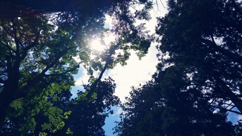 Tree Forest Sky