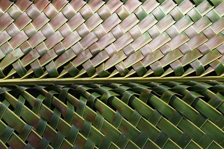 Pattern Pieces Palm leaf handicraft Palm Trees Palm Palm Tree Leaf Leafs Nature Fine Art Photography Beautifully Organized Handicraft