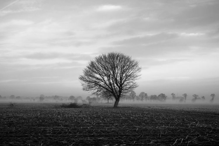 Lonely bare tree in a countryside morning landscape In Black and white Bare Tree Beauty In Nature Cloud - Sky Day Environment Field Isolated Land Landscape Nature No People Non-urban Scene Outdoors Plant Remote Scenics - Nature Sky Solitude Tranquil Scene Tranquility Tree