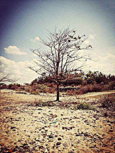 Arid Life Is A Beach Eye Em Nature Lover Trees On The Beach Trees And Sky